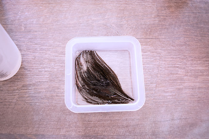 Feather in the Resin