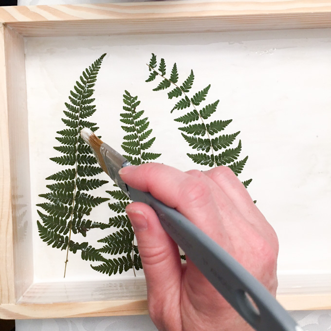 pressed fern and resin plaque