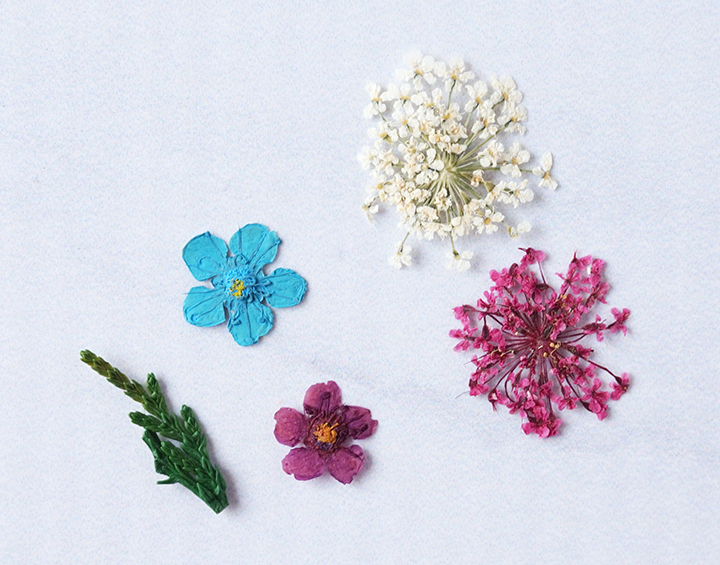 Colorful pressed flowers