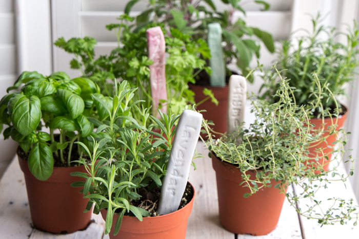 Such a cute idea! DIY Plant labels. Make stamped clay markers for your herb garden.
