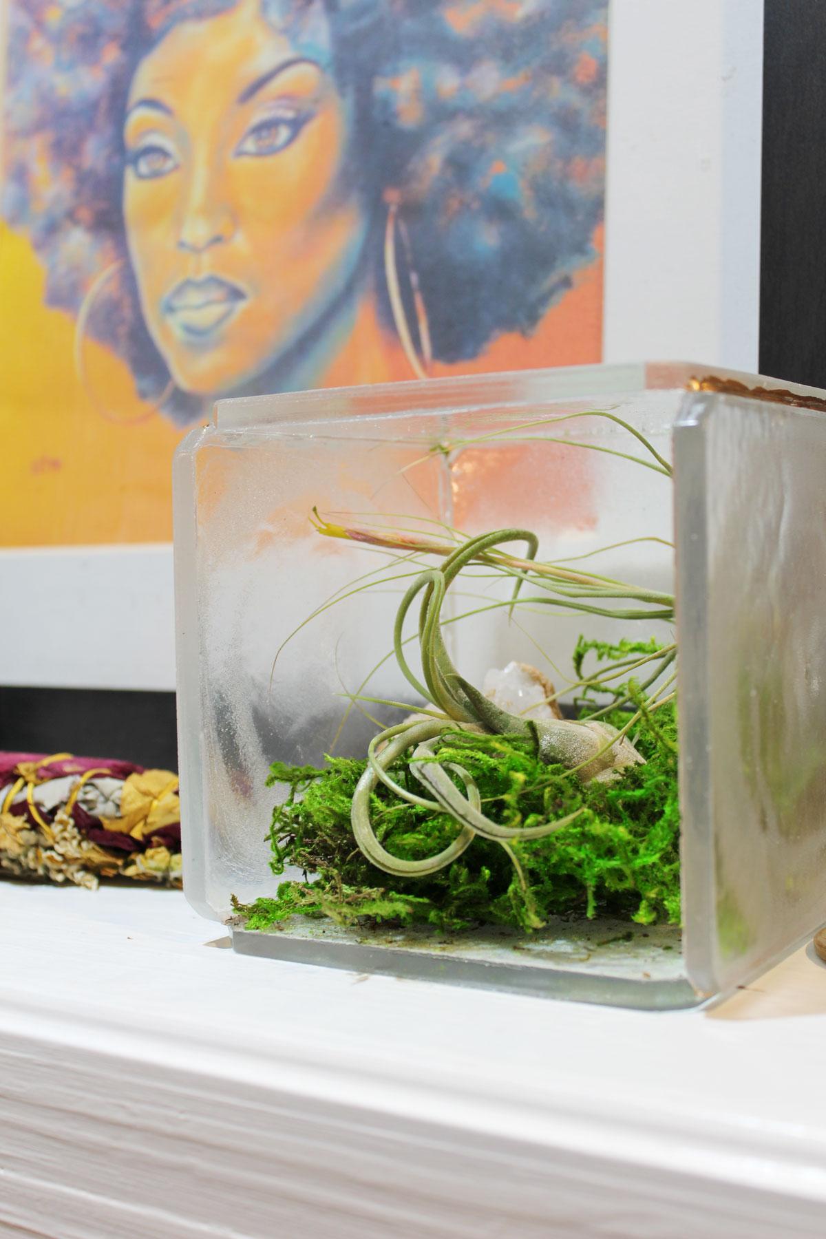 diy clear resin terrarium tutorial for displaying air plants. Black Bedroom Furniture Sets. Home Design Ideas